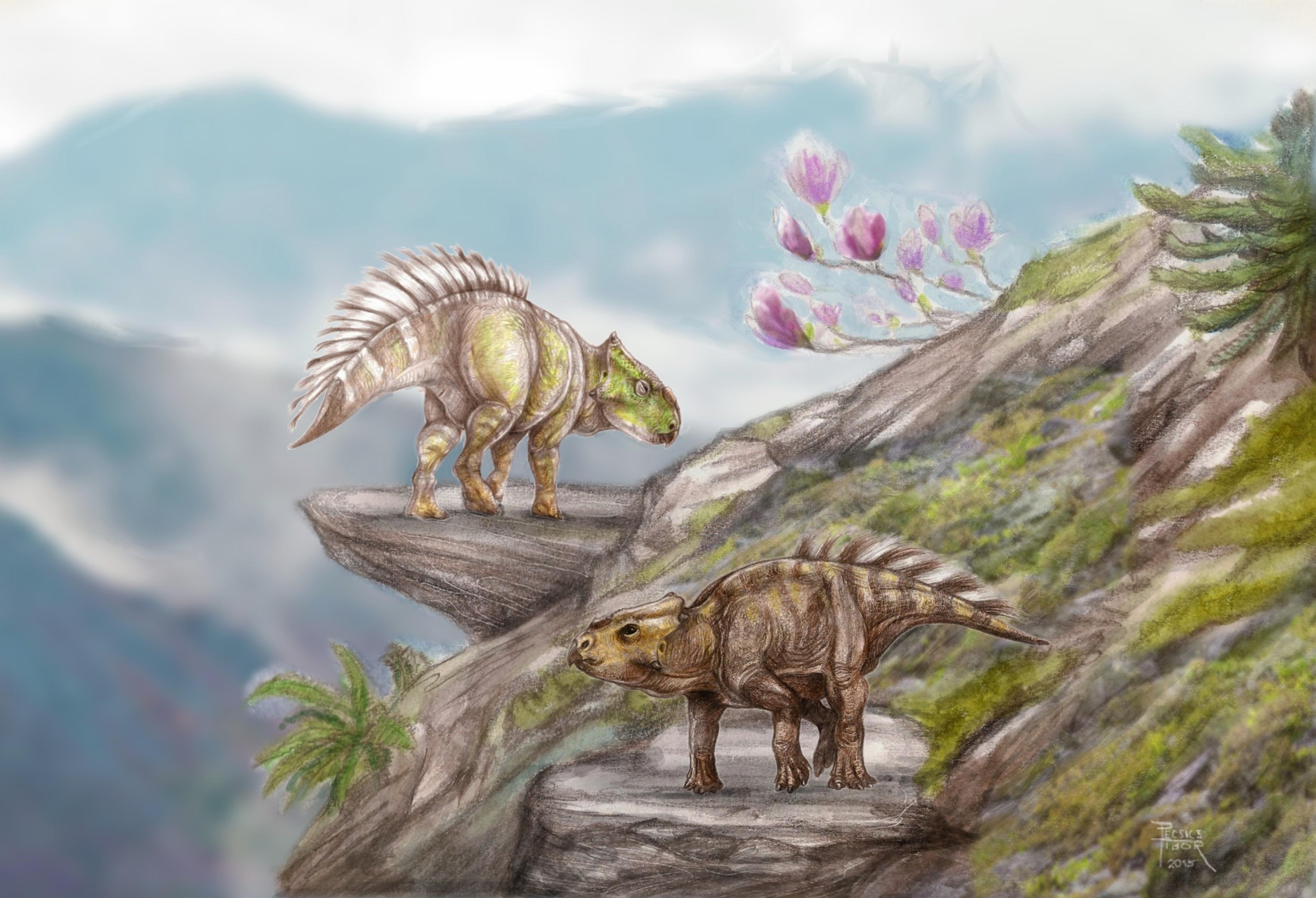 ajkaceratops_pecsics_tibor.JPG