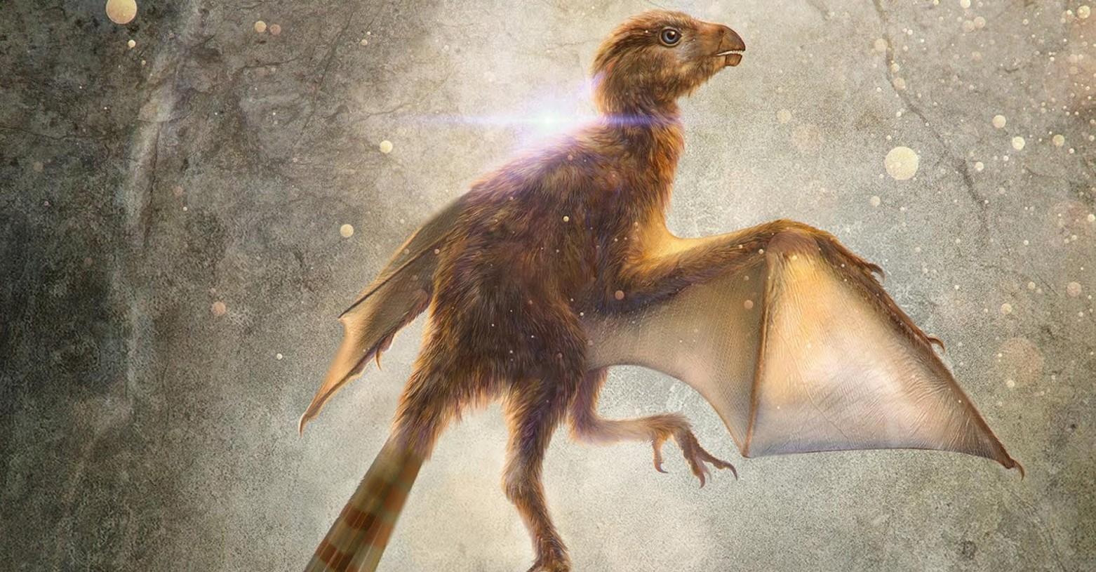 ambopteryx_fb.jpg