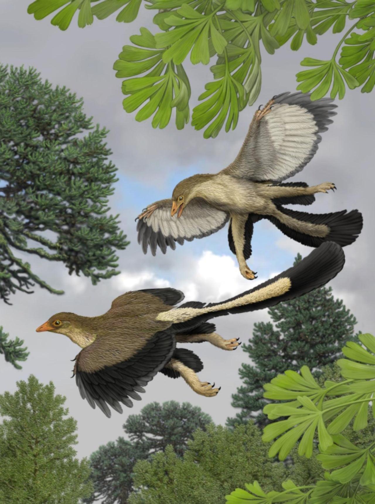 archaeopteryx_carl_buell_nicholas_longrich.jpg