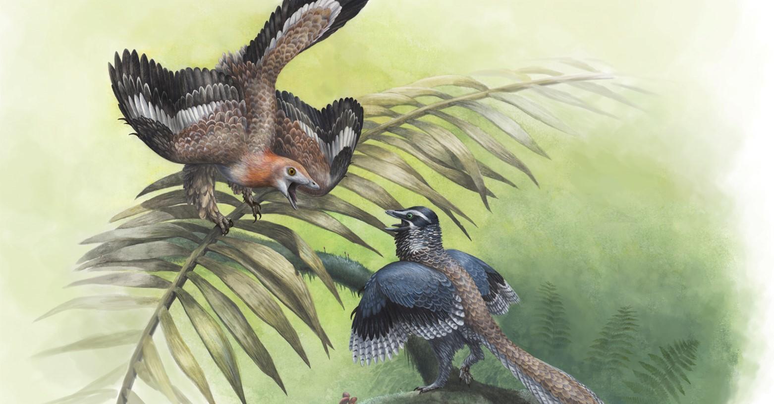 archaeopteryx_kihivoja_fb.jpg