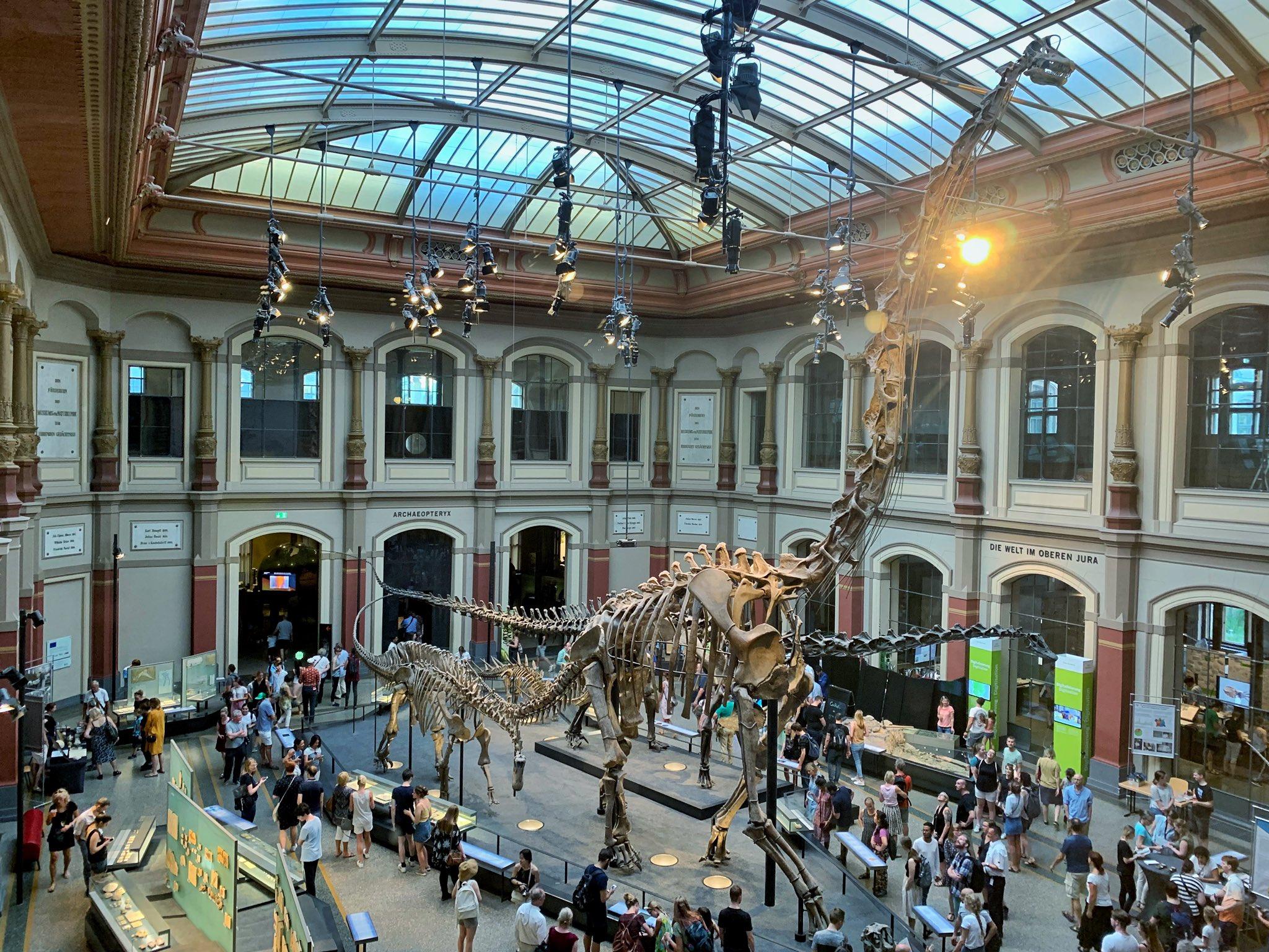 brachiosaurus_csontvaza_museum_fur_naturkunde_berlin.jpg