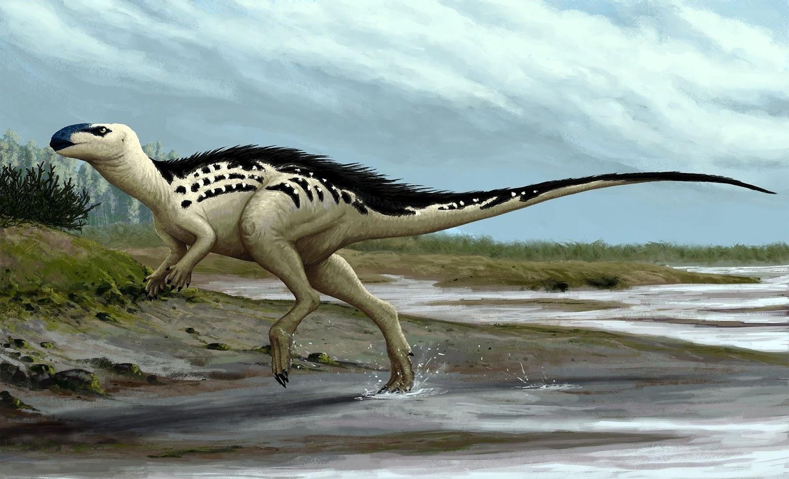burianosaurus_augustai_edyta_felcyn.jpg