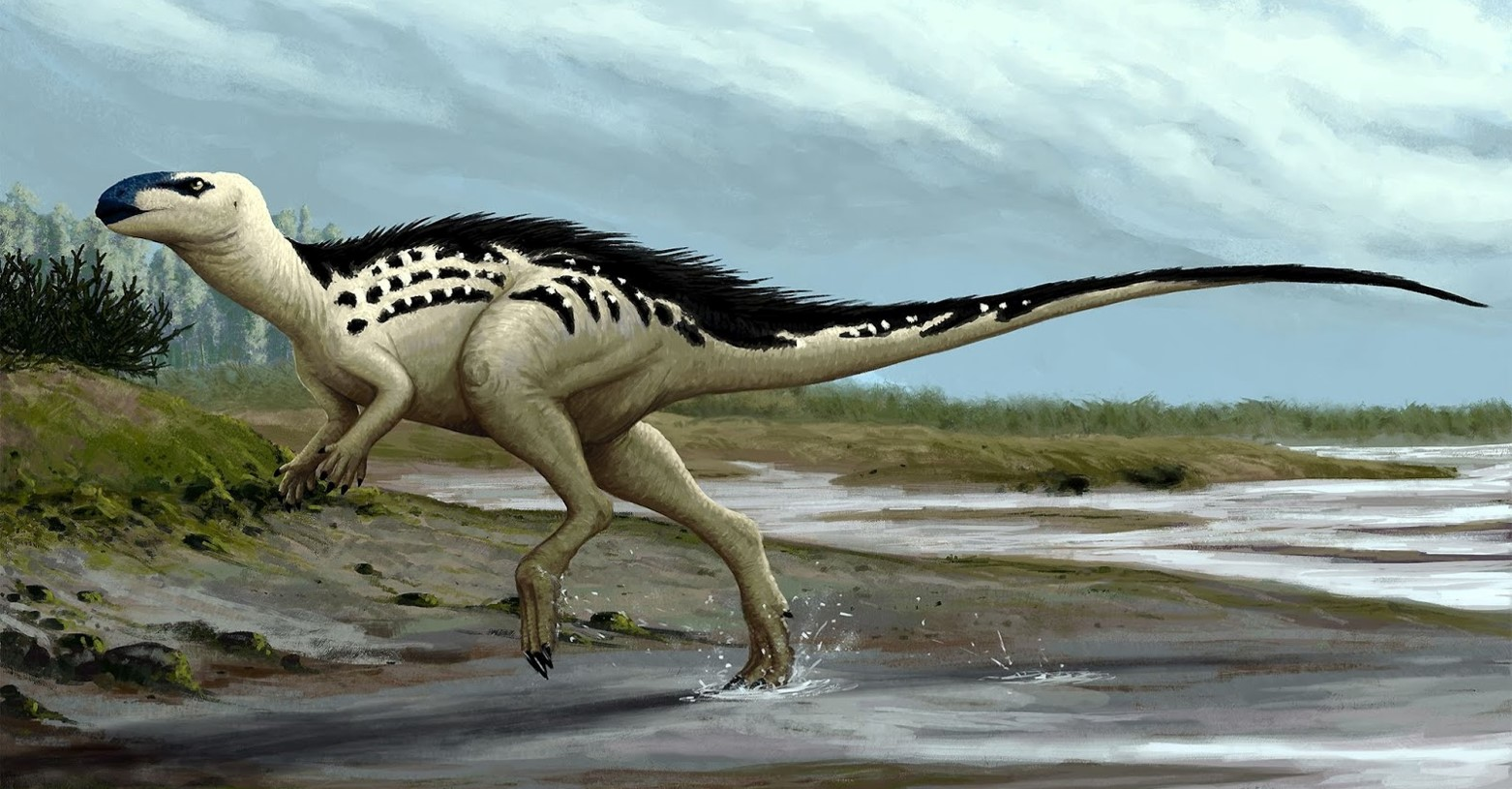 burianosaurus_fb.jpg