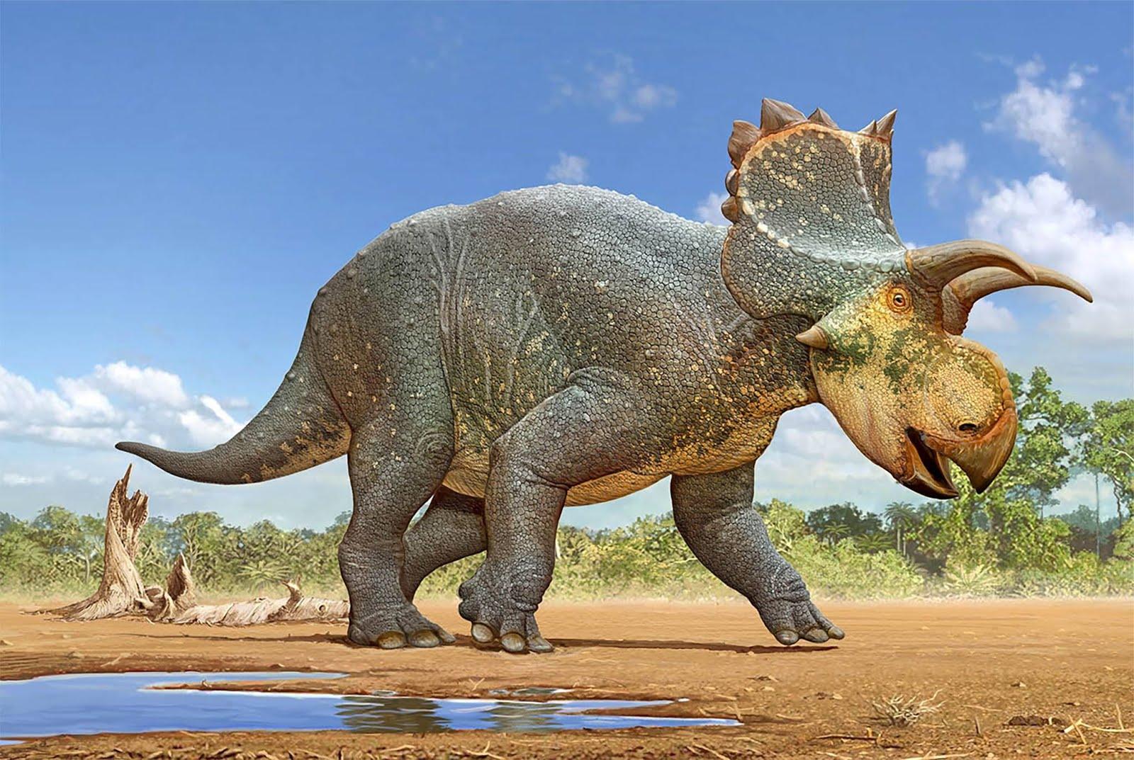 crittendenceratops_krzyzanowskii_sergey_krasovskiy.jpg