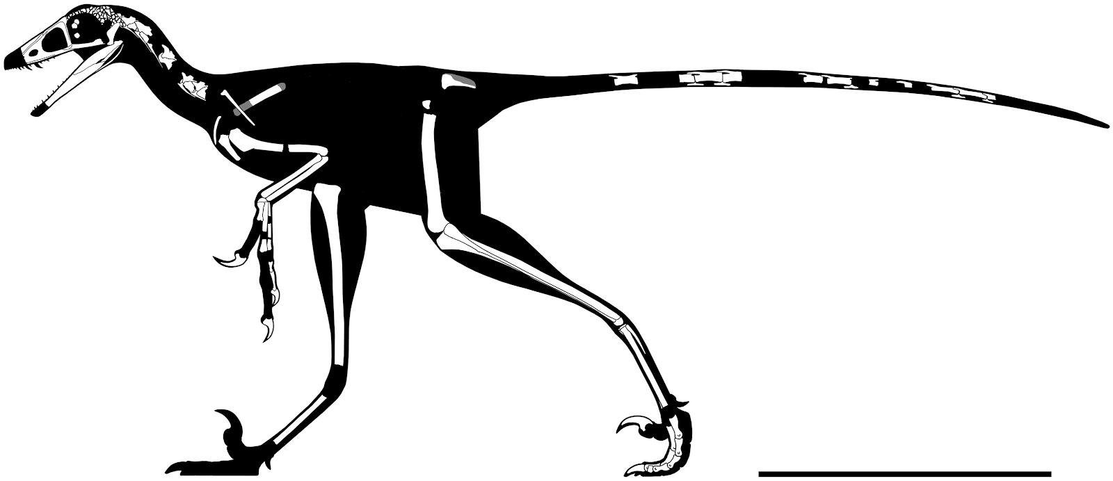 hesperornithoides_csontvaz-rekonstrukcio_scott_hartman.jpg
