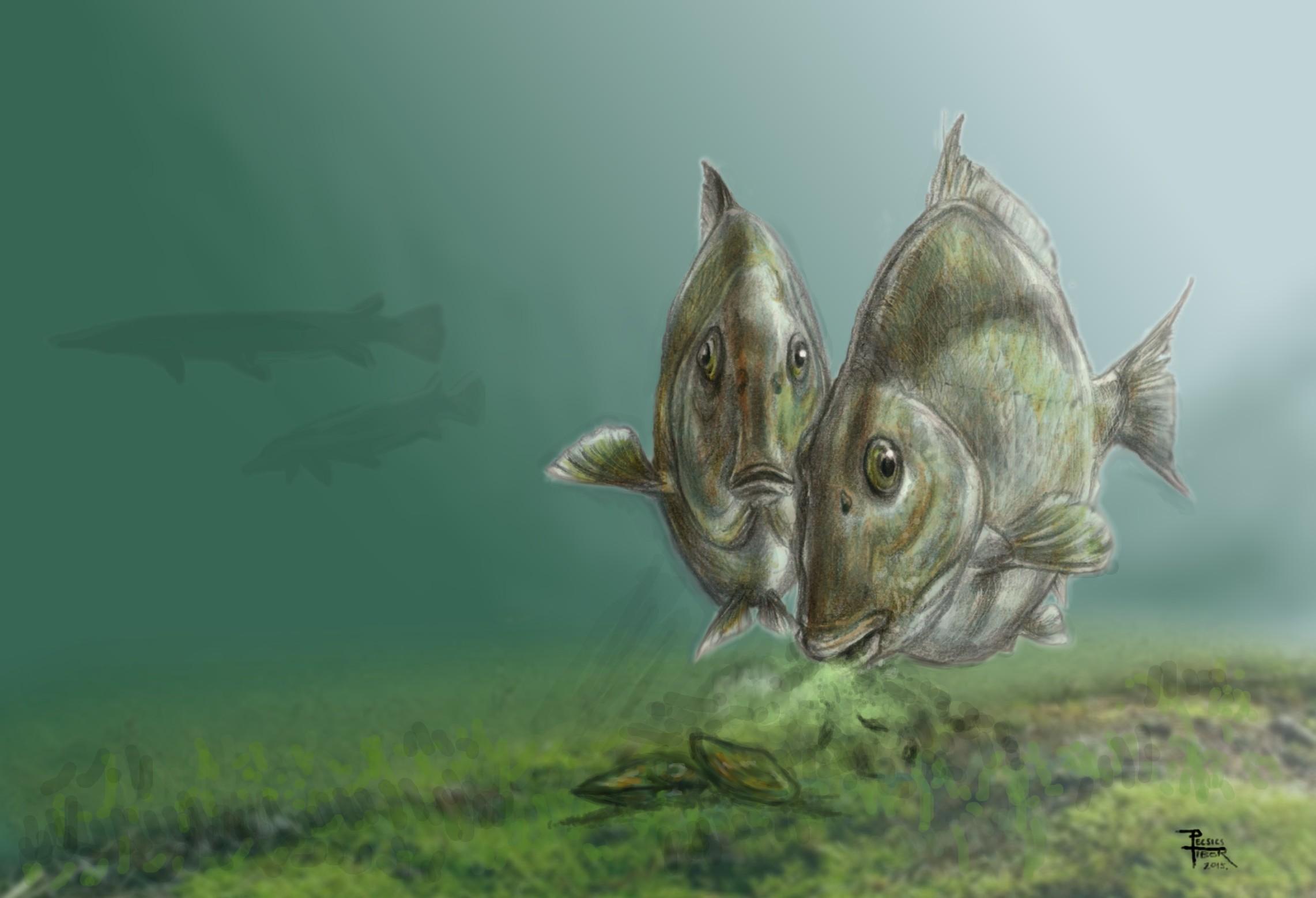 iharkuti_pycnodontiformes-halak_pecsics_tibor.jpg