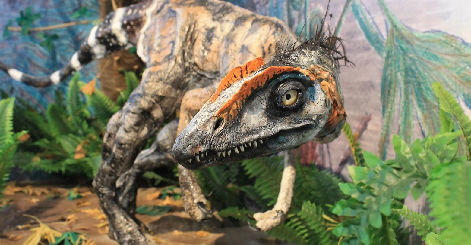 komlosaurus_fb.jpg
