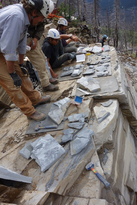marble_canyon_asatas_dr_jean-bernard_caron.jpg
