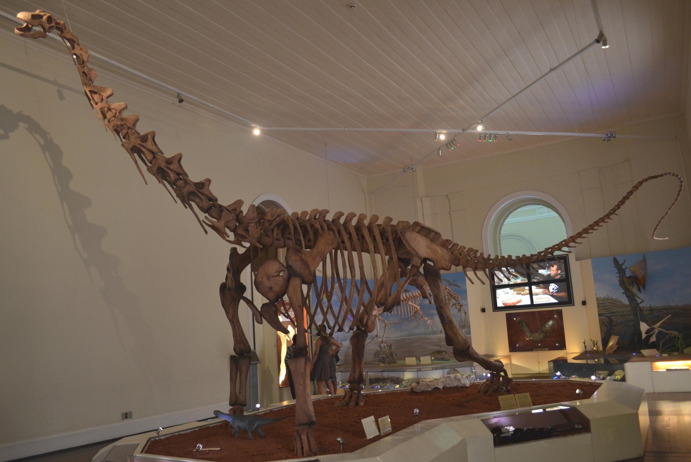 maxakalisaurus_csontvaza_wikimedia.jpg