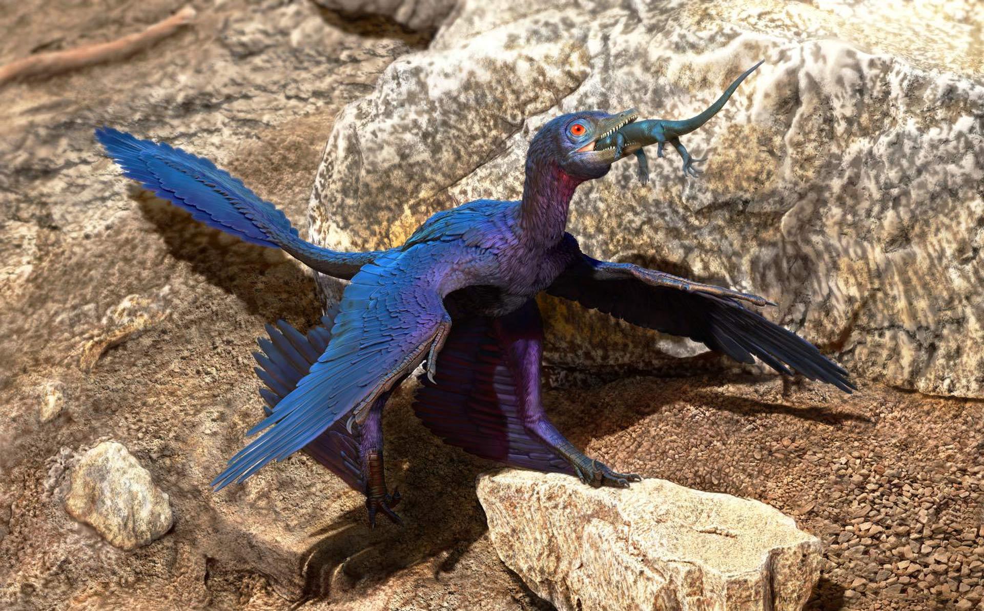 microraptor_zsakmanyaval_doyle_trankina.jpg