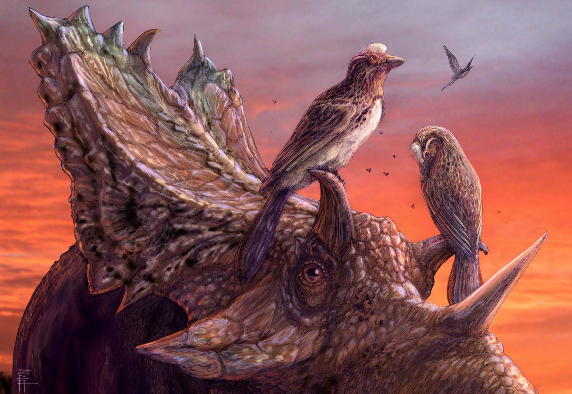 mirarce_eatoni_utahceratops_gettyi_brian_engh.jpg