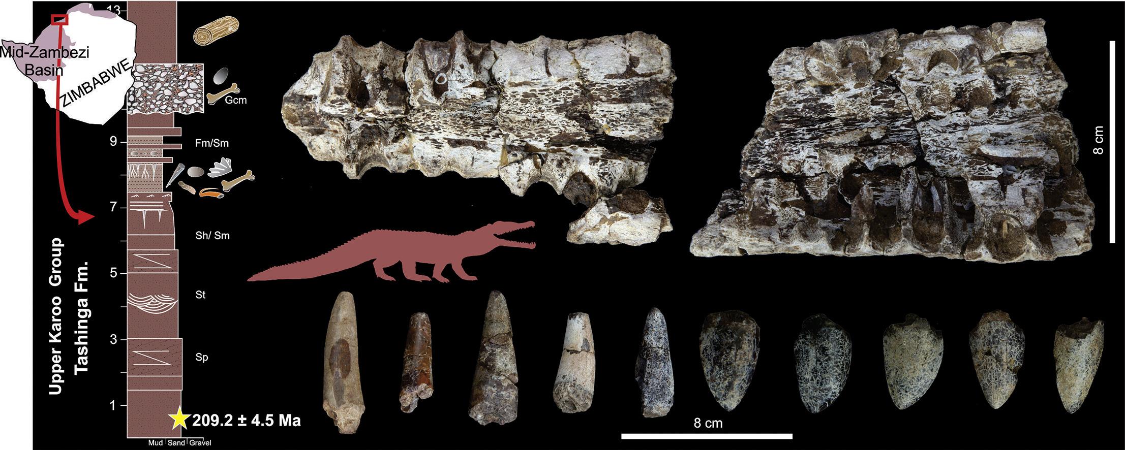 phytoszaurusz-fossziliak_paul_m_barrett_tarsai.jpg