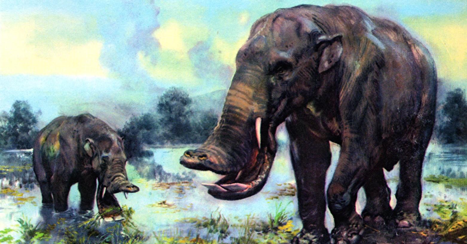 platybelodon_fb.jpg
