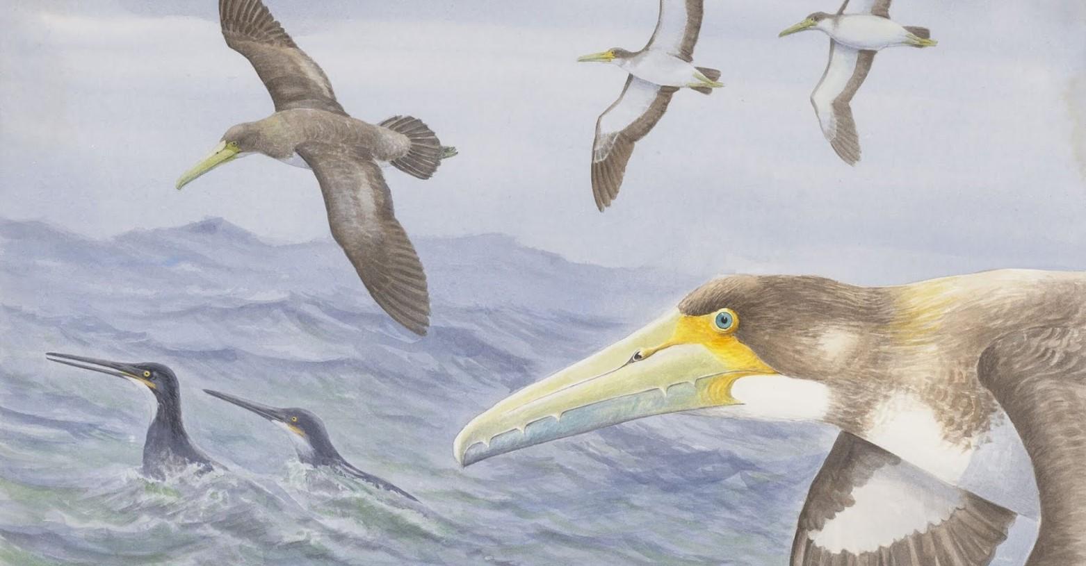 protodontopteryx_fb.jpg