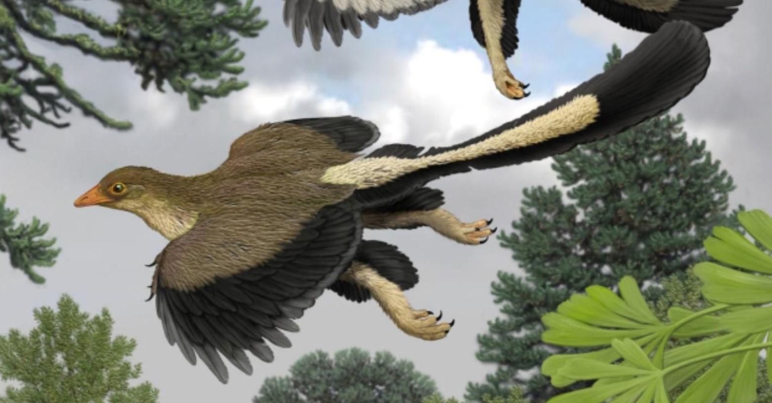 repulo_archaeopteryx_fb.jpg