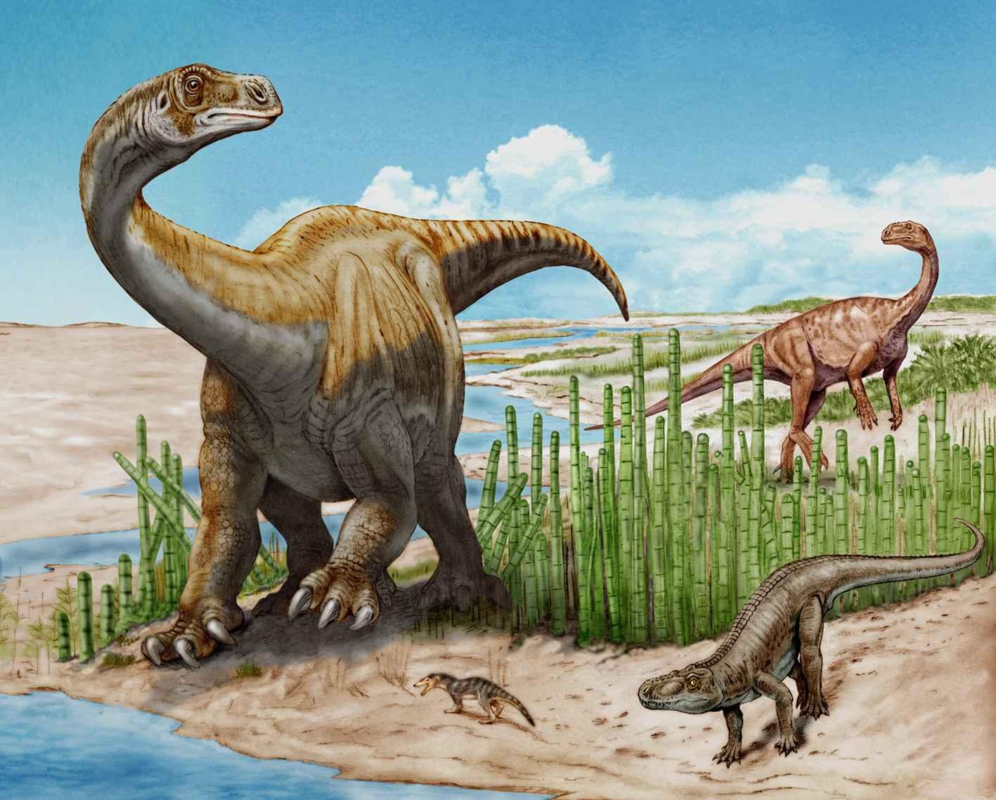 schleitheimia_plateosaurus_beat_scheffold.jpg