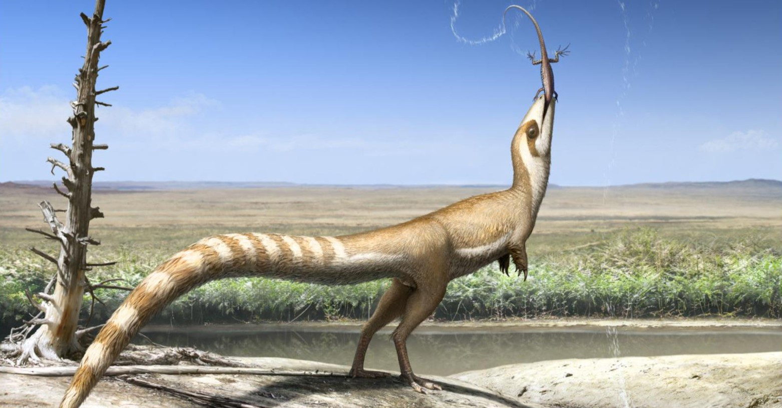 sinosauropteryx_2017_fb.jpg