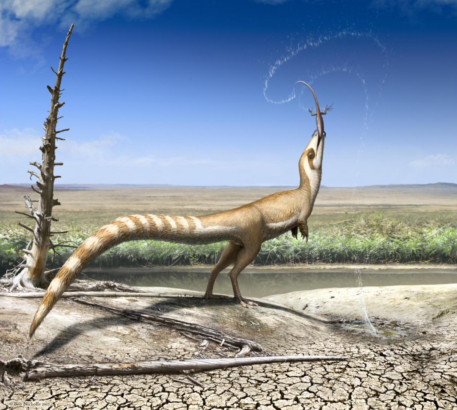 sinosauropteryx_bob_nicholls.jpg