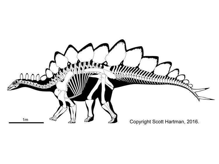 stegosaurus_rekonstrukcio_scott_hartman.jpg