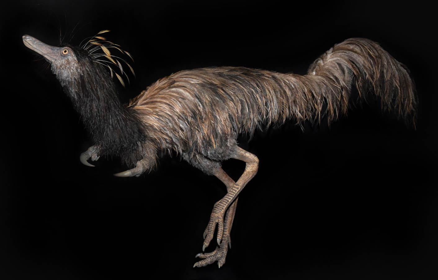 trierarchuncus-szobor_badlands_dinosaur_museum.jpg