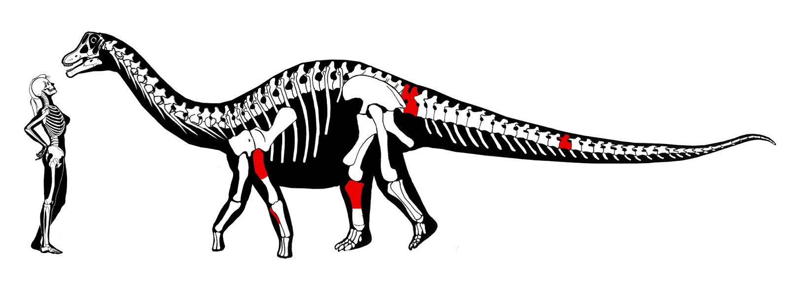 yamanasaurus_csontvazanak_rekonstrukcioja_sebastian_apesteguia_tarsai.jpg