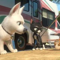 Bolt: milyen kutyának lenni