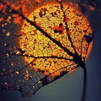 őszi csend