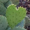 A kaktusz