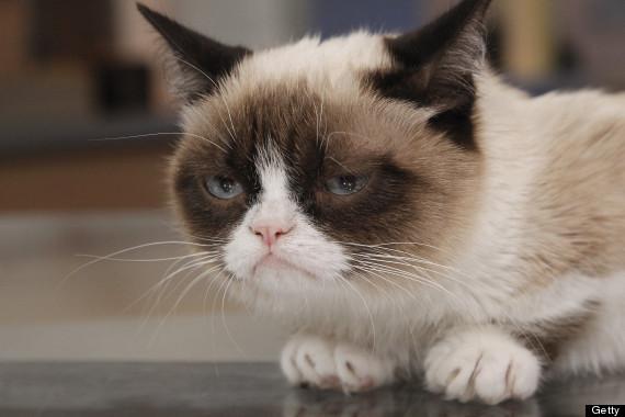 o-grumpy-cat-570.jpg