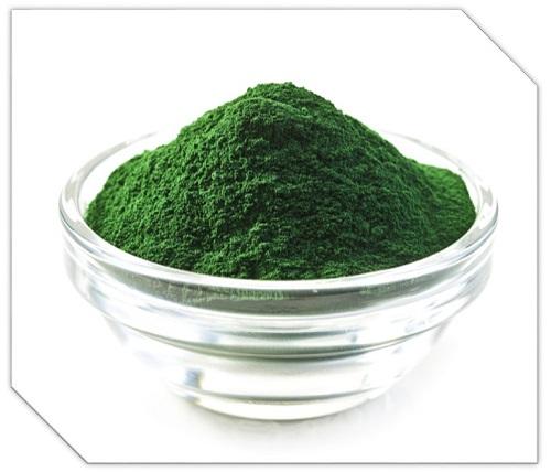 alga.jpg