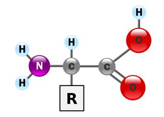 aminosav.png