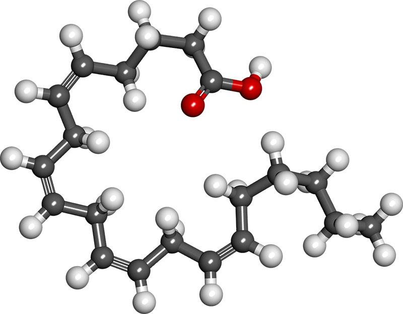 arachidonic_acid.jpg