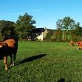 További látnivalók Aveyron megyében