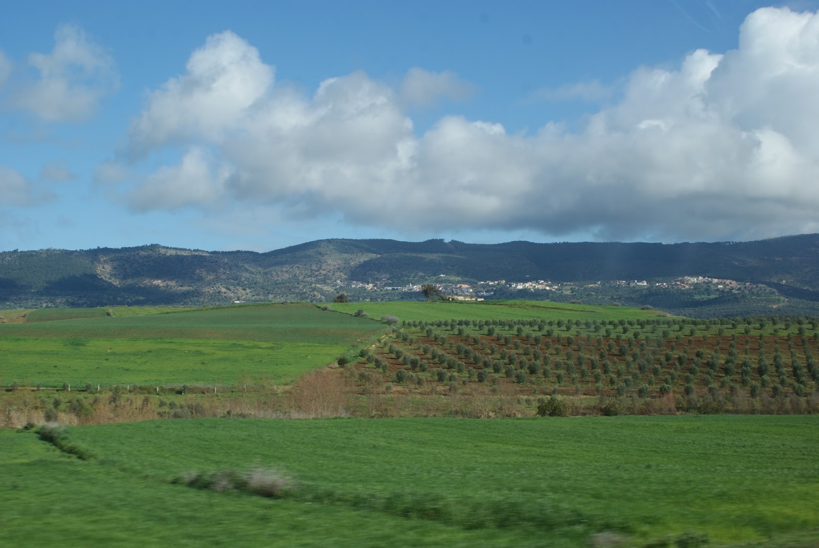 Volubilis & Moulay Idriss