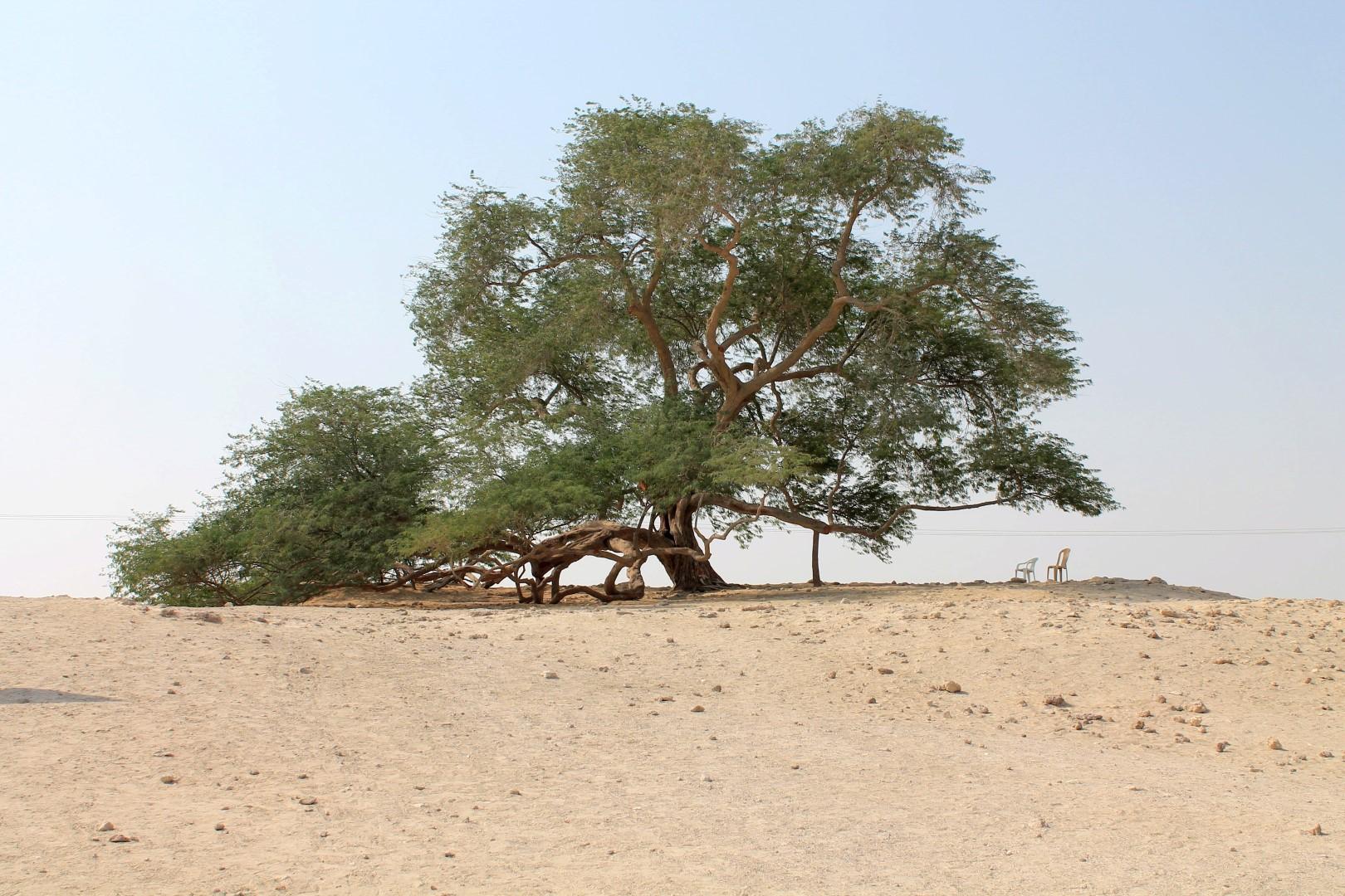 tree_of_life_bahrain.jpg