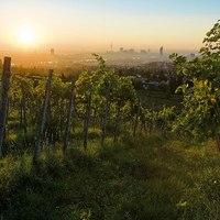 Bécs, bor és dizájn