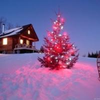 Karácsonyi borok