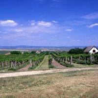 Pinot párosok IX.