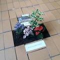 Művelgessük kertjeinket - gerillakertészet az iskolai folyosón