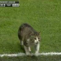 Botrány: macskabűnöző zavarta meg a Liverpool - Tottenham összecsapást