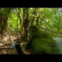 Fotóst erőszakolt a kanos papagáj