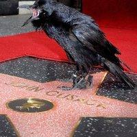 Fizetett károgók Hollywoodban