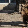 A medvék tehetnek róla: hosszú telünk lesz