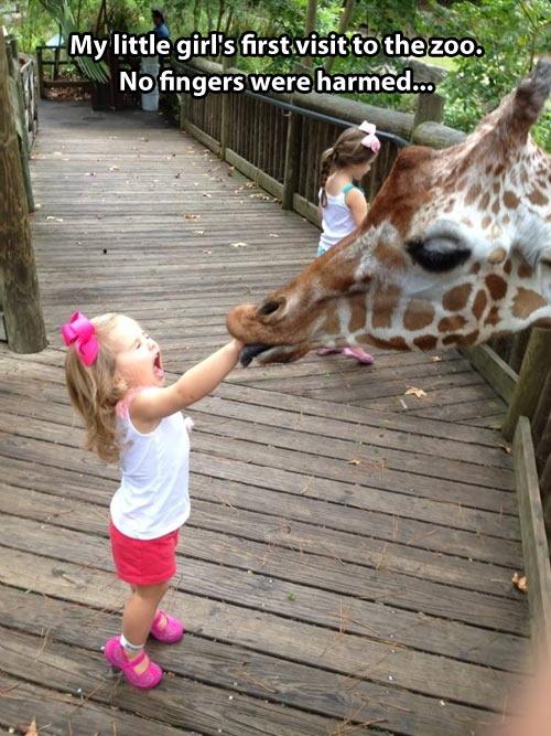 funny-giraffe-89.jpg