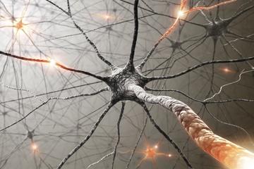 neurons-120208.jpg