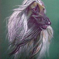 Afghan kutya