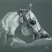 Az első lovacs