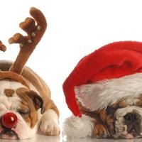 Biztonságos Karácsont!