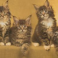 A macska tízparancsolata
