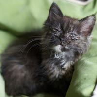 Mit ér egy cica élet?